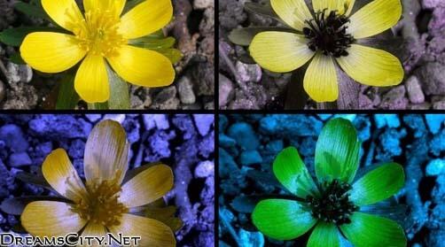 رؤة الفراشات للاشياء