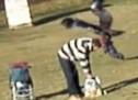 ابشع فيديو في 2015 : نسر يختطف طفل من اسرته