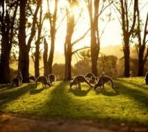 شاهد صور الطبيعة الرائعة في استراليا