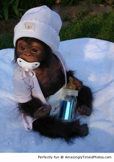 An-adorable-baby-monkey-resizecrop--