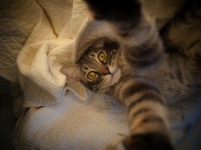 Cats-Selfies