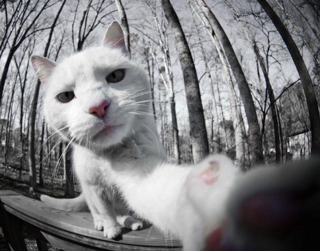 Cats-Selfies4