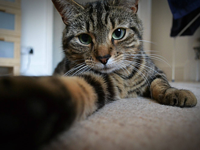 Cats-Selfies5