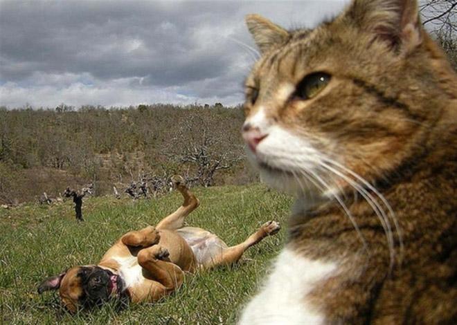 Cats-Selfies8