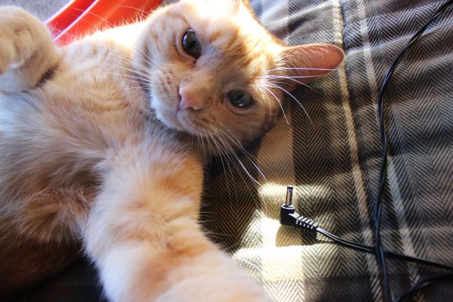 Cats-Selfies9
