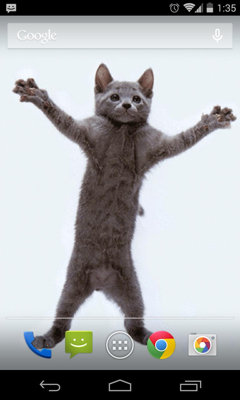 Dancing-Cat