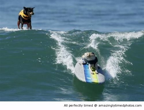 Dog-can-stand-on-water-resizecrop--