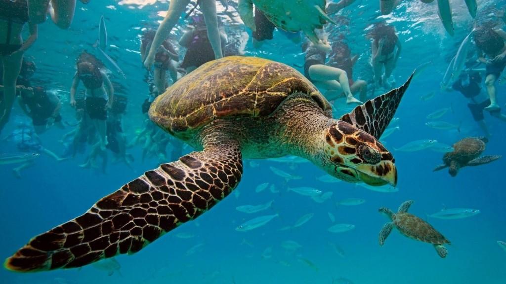 Hawksbill-Turtle-1024x576