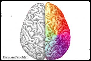مقارنة الدماغ الايمن والدماغ الايسر