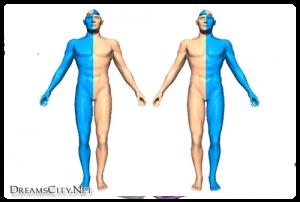 تحكم الدماغ الايمن والايسر في الجسم