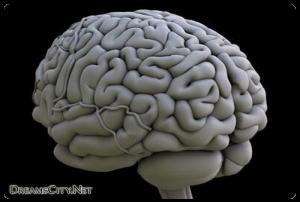 الدماغ الايمن والدماغ الايسر