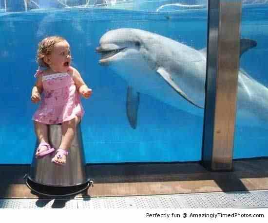 The-Dolphin-just-want-to-say-hi-resizecrop--