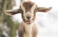علامات الصحة والمرض عند الحيوان
