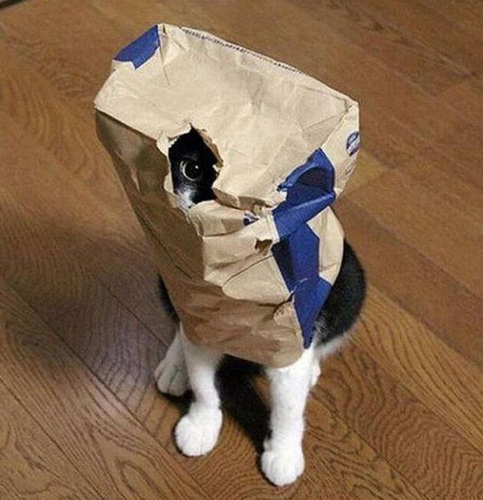 cats_know_how_to_hide