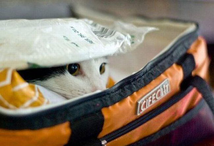 cats_know_how_to_hide_1