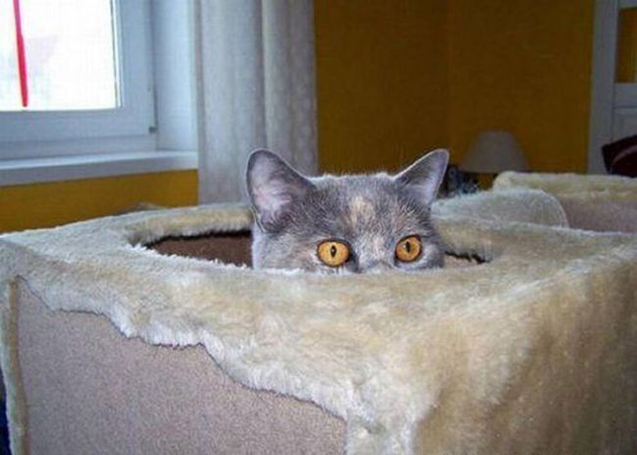 cats_know_how_to_hide_12