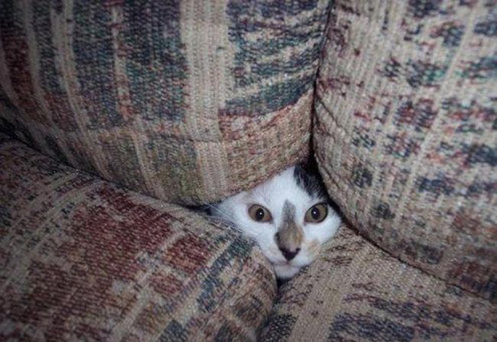 cats_know_how_to_hide_13