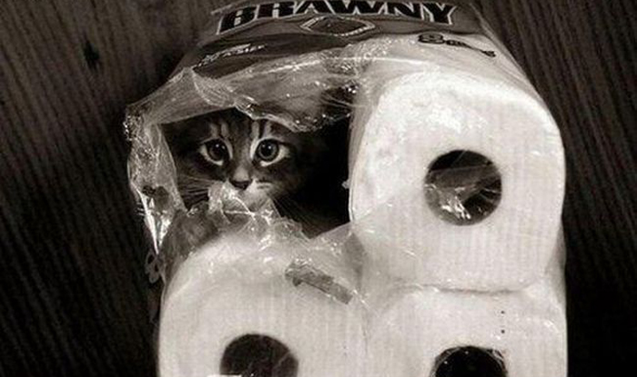 cats_know_how_to_hide_14