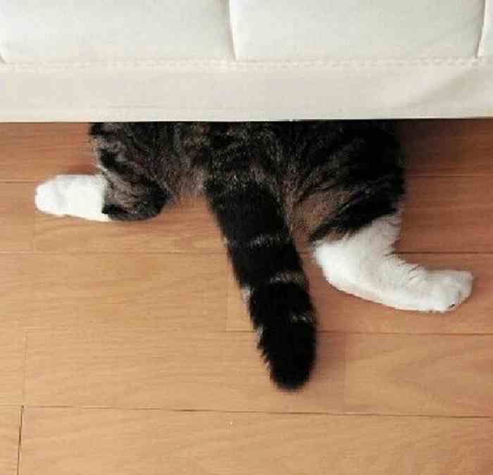 cats_know_how_to_hide_15