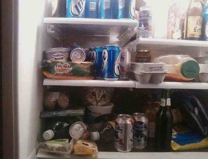 cats_know_how_to_hide_16