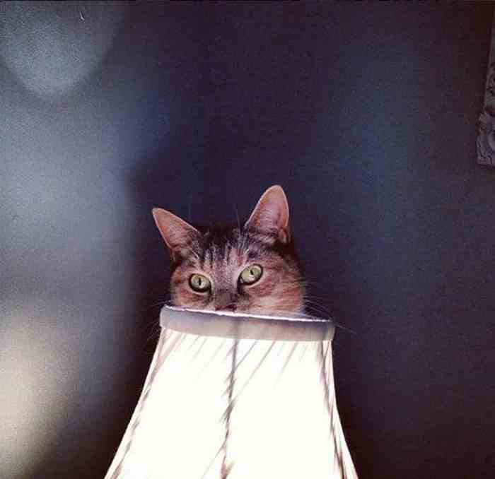 cats_know_how_to_hide_18