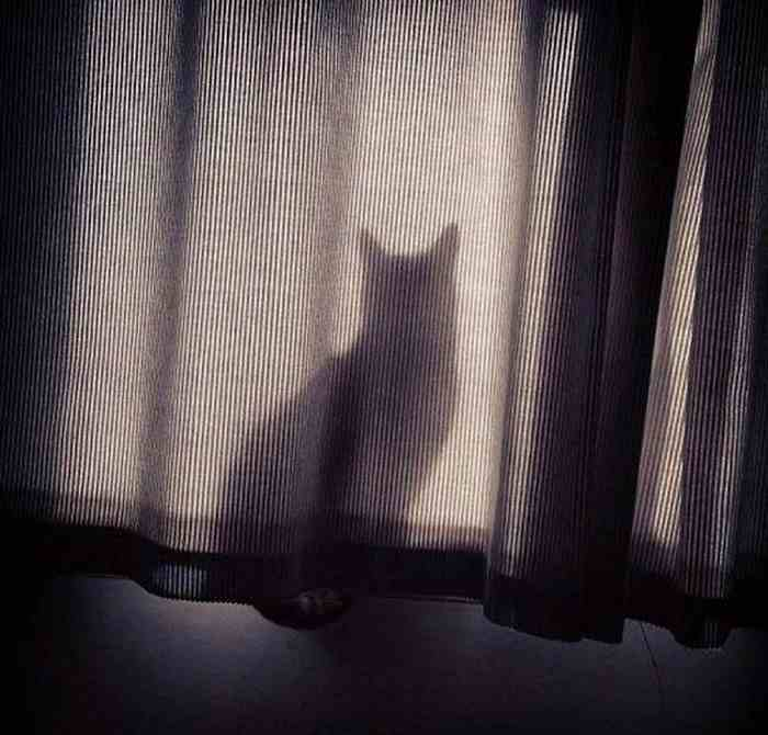 cats_know_how_to_hide_19