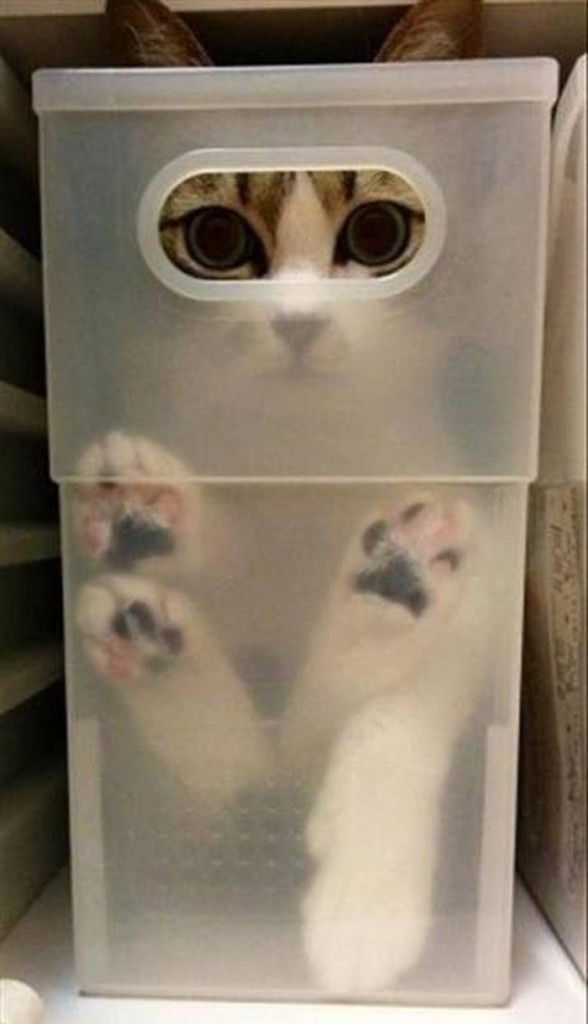 cats_know_how_to_hide_2