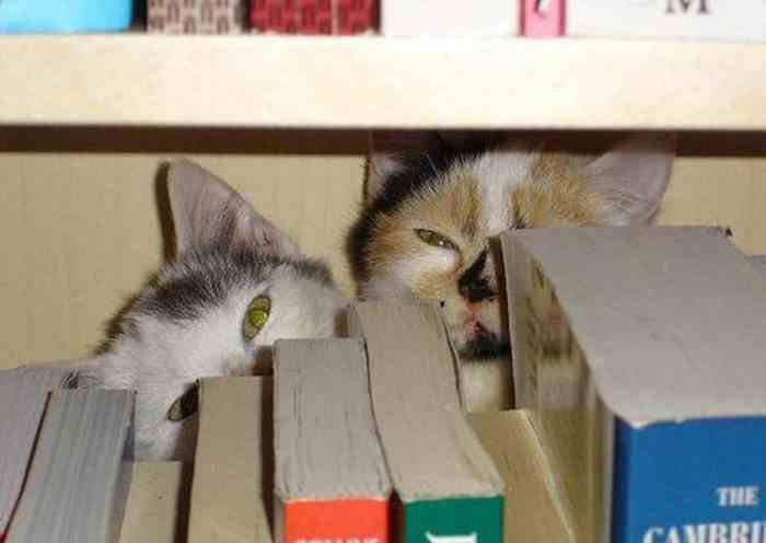 cats_know_how_to_hide_20