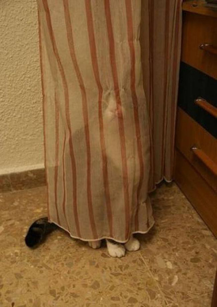 cats_know_how_to_hide_3
