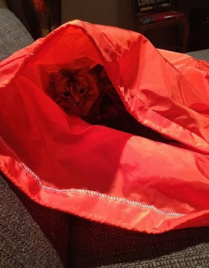 cats_know_how_to_hide_5