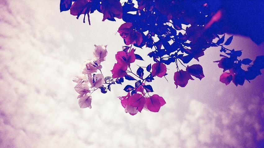 flower-lomo