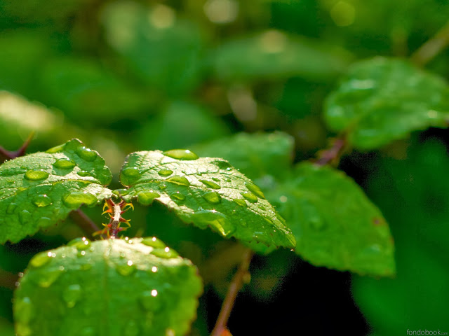 fondo_hd_43_hojas_verdes_gotas