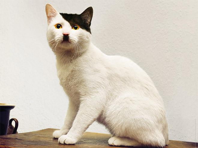 hitler-cat1