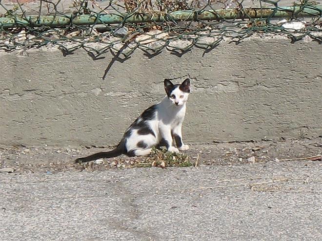 hitler-cat10