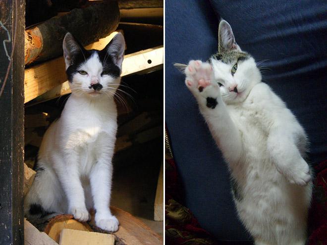 hitler-cat12