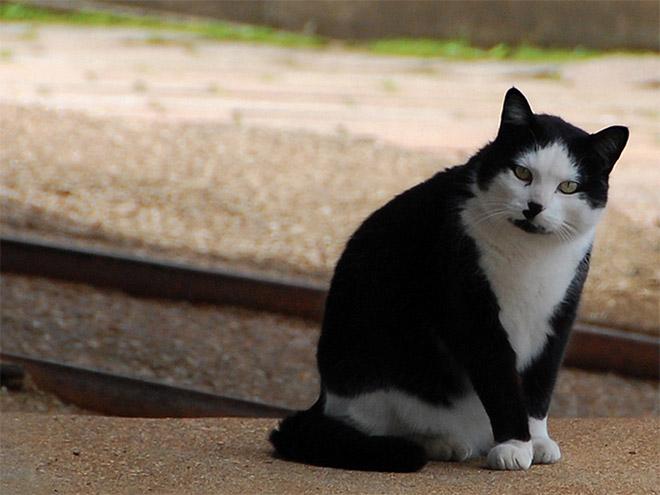 hitler-cat14