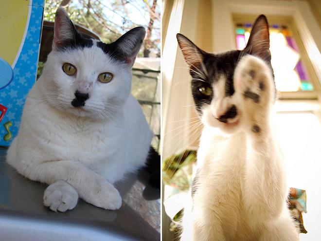 hitler-cat15