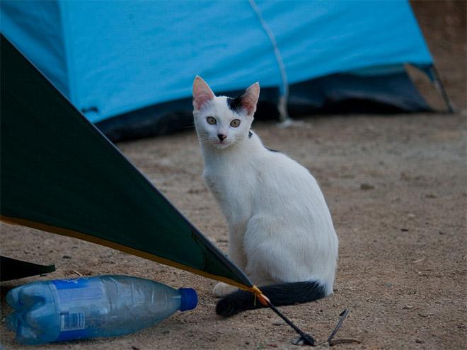 hitler-cat17