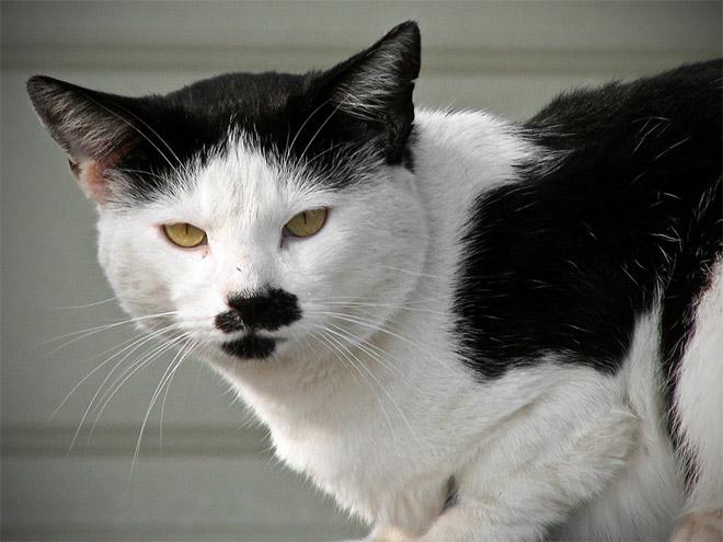 hitler-cat3