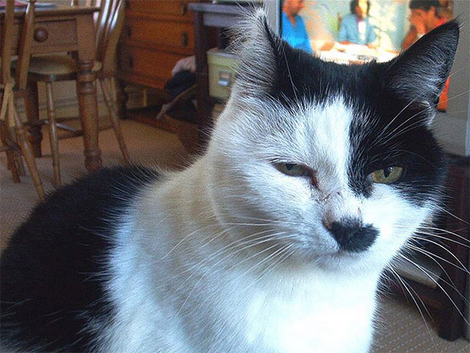 hitler-cat8