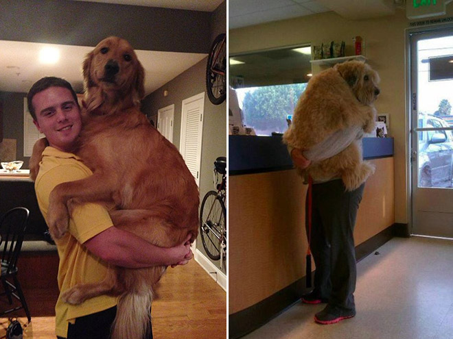 huge-puppy10