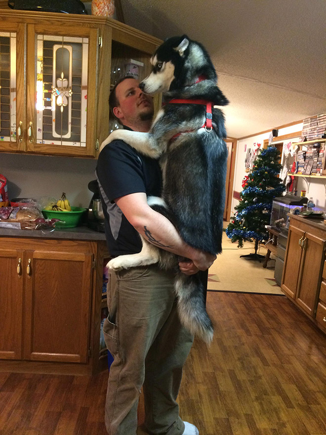 huge-puppy17