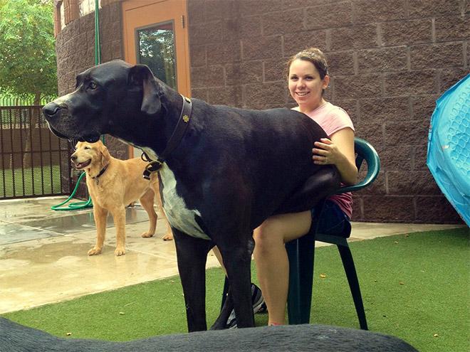 huge-puppy3