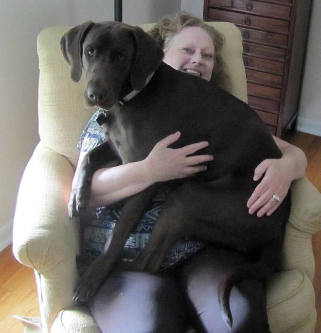 huge-puppy5