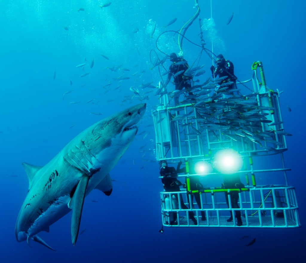 shark_dive_cage