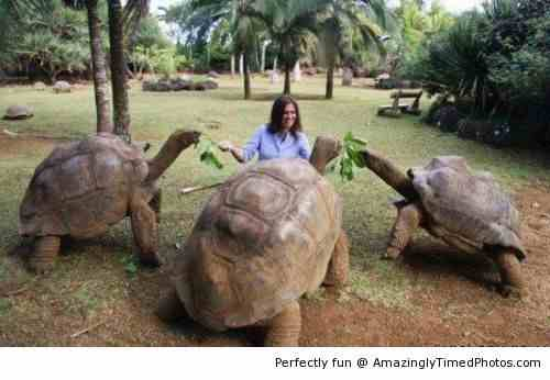 the-Galapagos-Tortoise-resizecrop--