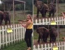 بالفيديو : أفيال ترقص على عزف الكمنجه