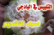 اسباب التشحيم او التلييس عند الطيور