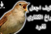كيفية جعل طائر الكناري يغرد
