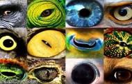 كيف ترى الحيوانات الاشياء